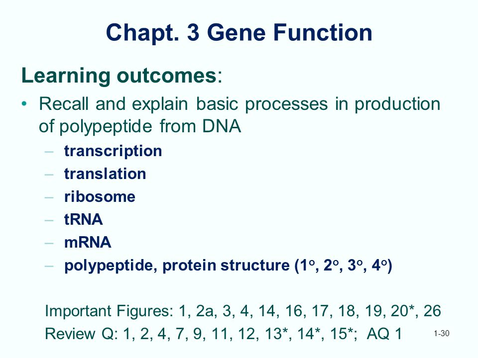 Chapt. 3 Gene Function Learning outcomes: Recall and explain basic processes in production of polypeptide from DNA – transcription – translation – rib
