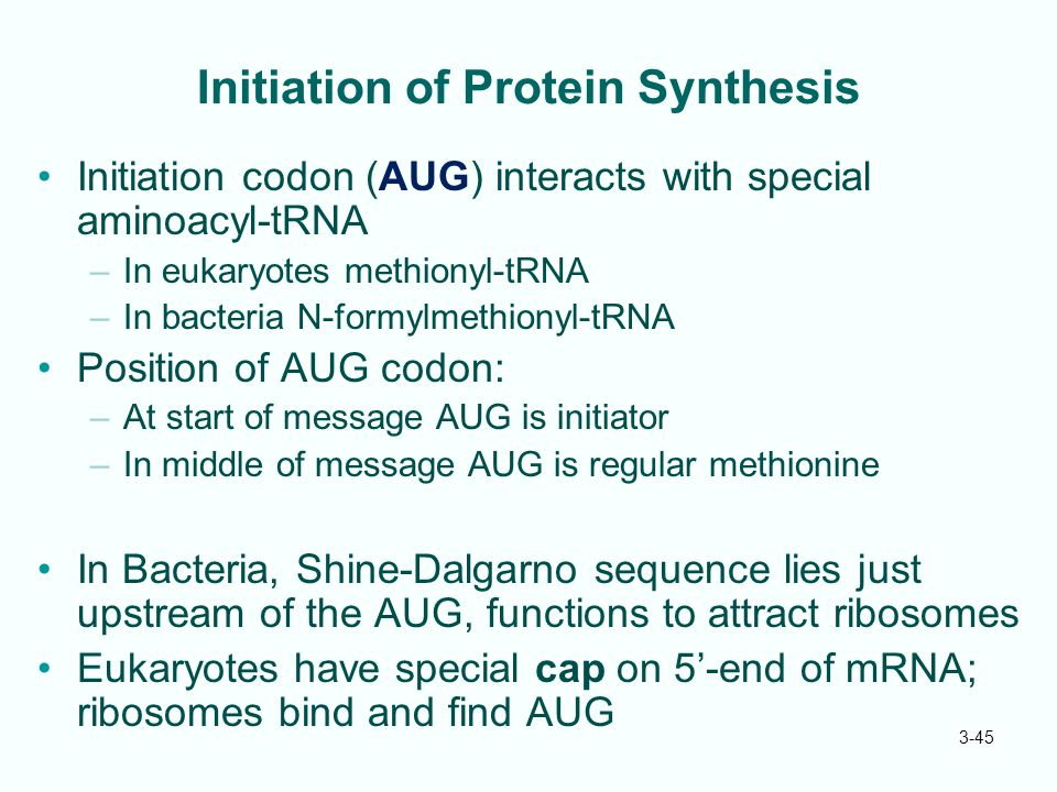 3-45 Initiation of Protein Synthesis Initiation codon (AUG) interacts with special aminoacyl-tRNA –In eukaryotes methionyl-tRNA –In bacteria N-formylm
