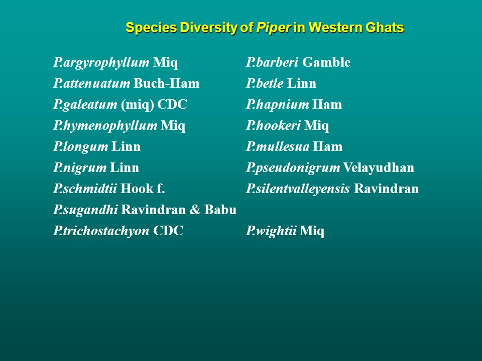 Species Diversity of Piper in Western Ghats P.argyrophyllum MiqP.barberi Gamble P.attenuatum Buch-Ham P.betle Linn P.galeatum (miq) CDCP.hapnium Ham P.hymenophyllum MiqP.hookeri Miq P.longum LinnP.mullesua Ham P.nigrum LinnP.pseudonigrum Velayudhan P.schmidtii Hook f.P.silentvalleyensis Ravindran P.sugandhi Ravindran & Babu P.trichostachyon CDCP.wightii Miq