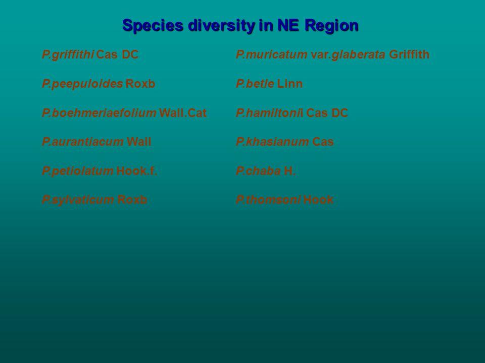Species diversity in NE Region P.griffithi Cas DCP.muricatum var.glaberata Griffith P.peepuloides RoxbP.betle Linn P.boehmeriaefolium Wall.CatP.hamiltonii Cas DC P.aurantiacum WallP.khasianum Cas P.petiolatum Hook.f.P.chaba H.