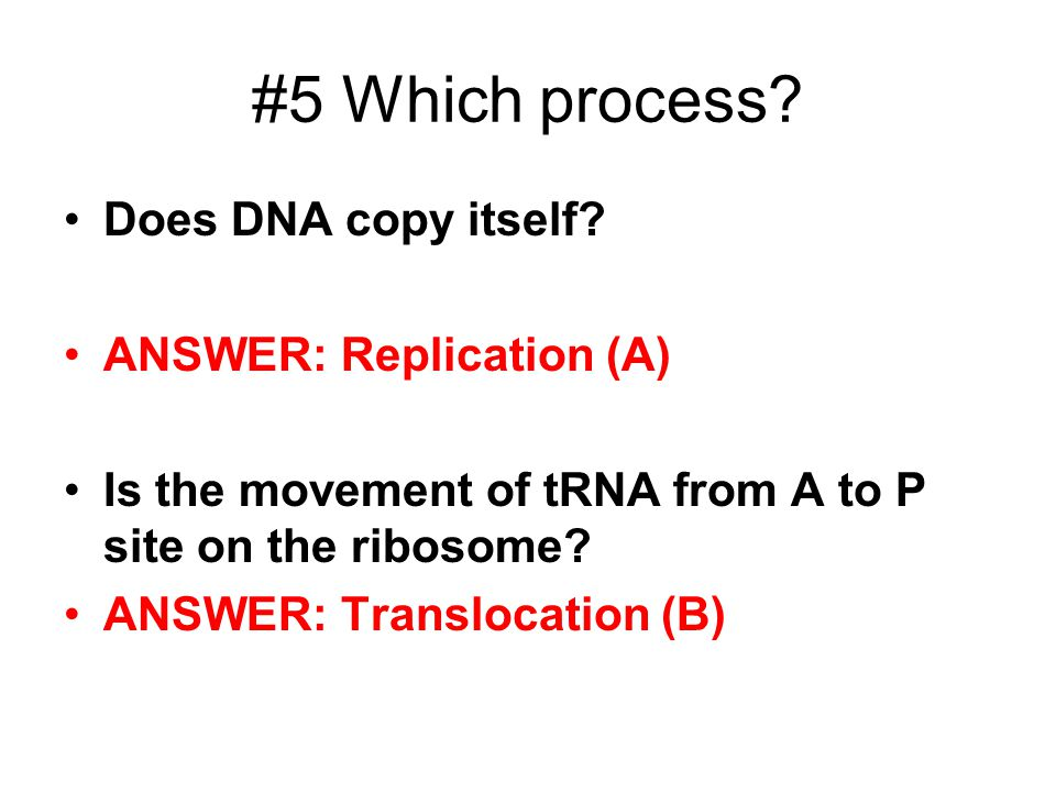 #5 Which process.Does DNA copy itself.