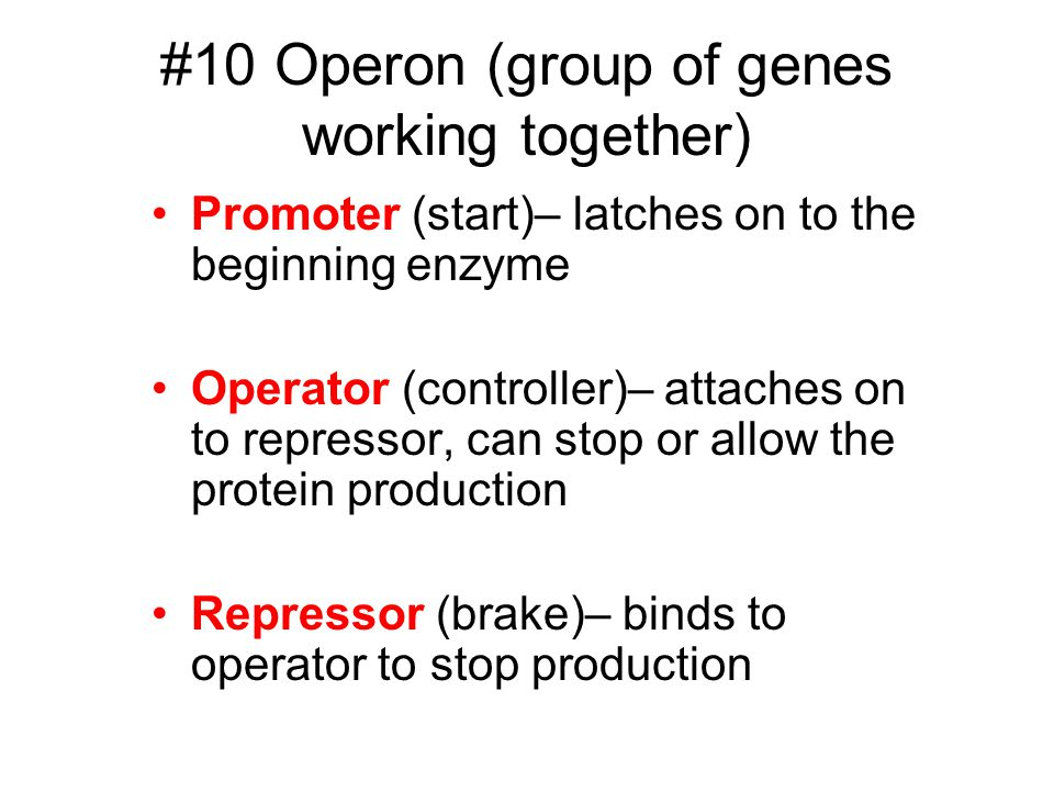 #10 Operon (group of genes working together) Promoter (start)– latches on to the beginning enzyme Operator (controller)– attaches on to repressor, can stop or allow the protein production Repressor (brake)– binds to operator to stop production