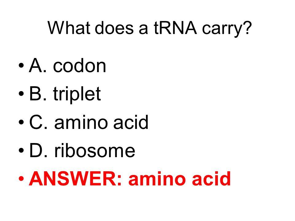 What does a tRNA carry? A. codon B. triplet C. amino acid D. ribosome ANSWER: amino acid