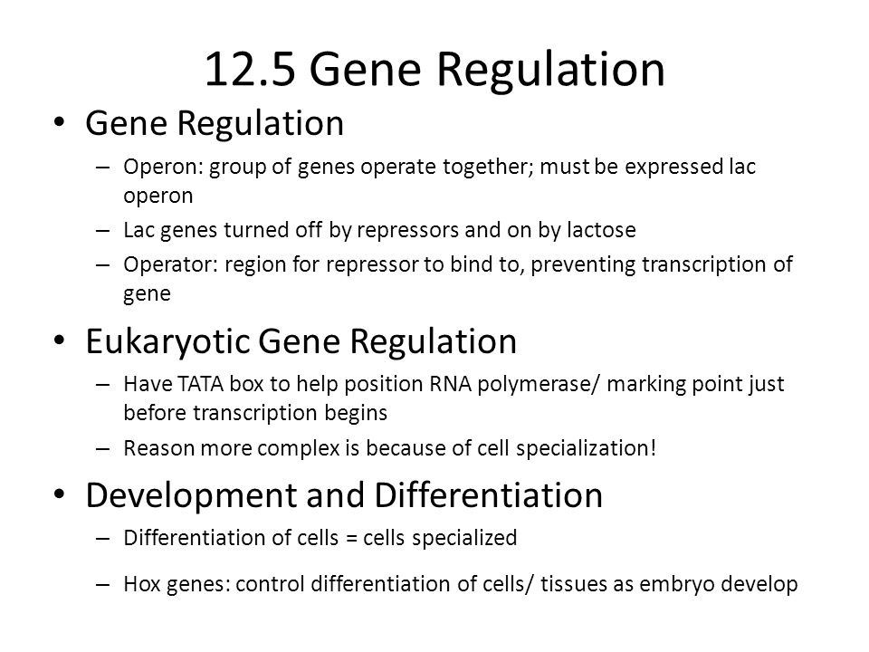 12.5 Gene Regulation Gene Regulation – Operon: group of genes operate together; must be expressed lac operon – Lac genes turned off by repressors and on by lactose – Operator: region for repressor to bind to, preventing transcription of gene Eukaryotic Gene Regulation – Have TATA box to help position RNA polymerase/ marking point just before transcription begins – Reason more complex is because of cell specialization.