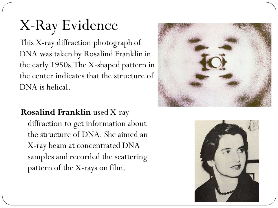 X-Ray Evidence This X-ray diffraction photograph of DNA was taken by Rosalind Franklin in the early 1950s. The X-shaped pattern in the center indicate