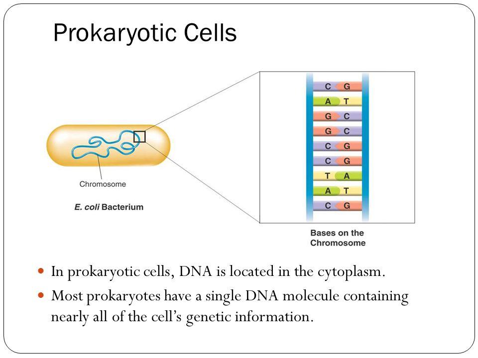 Prokaryotic Cells In prokaryotic cells, DNA is located in the cytoplasm.