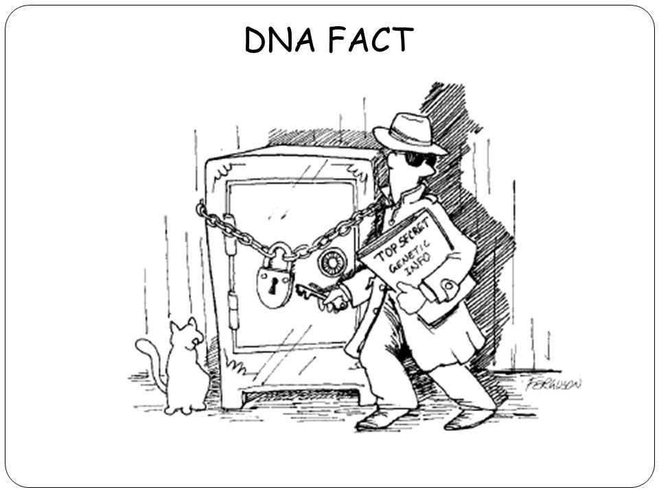 DNA FACT