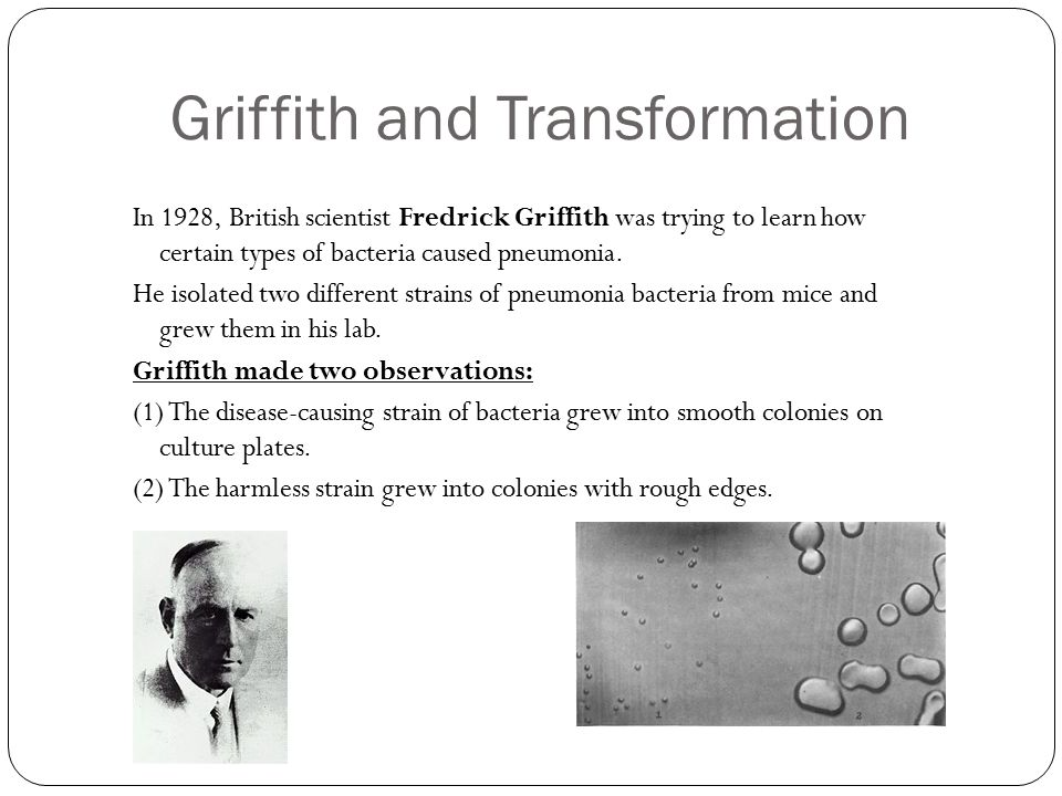 Griffith and Transformation In 1928, British scientist Fredrick Griffith was trying to learn how certain types of bacteria caused pneumonia. He isolat