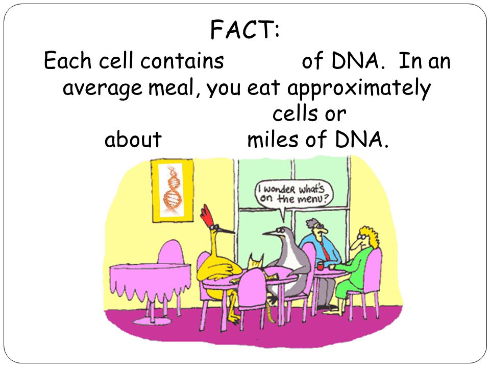 Each cell contains 9 feet of DNA.