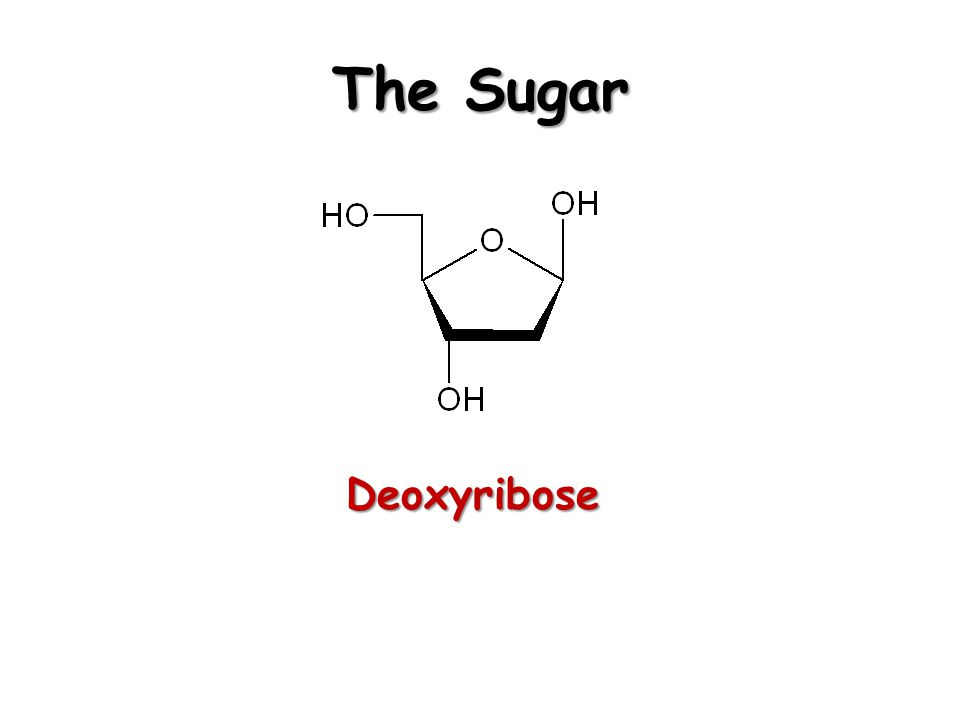 The Sugar Deoxyribose
