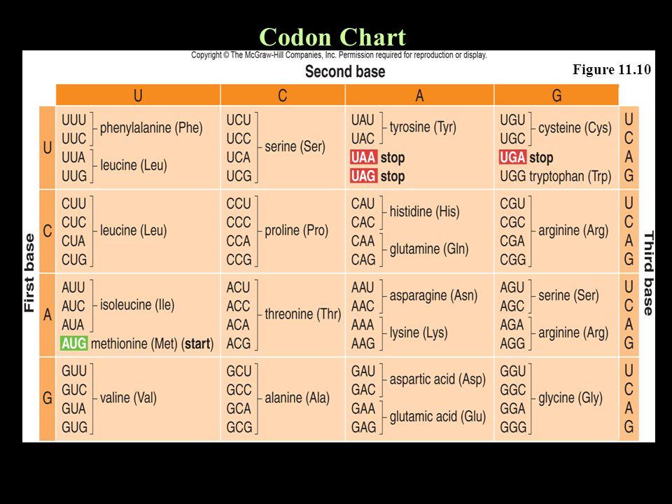 Codon Chart Figure 11.10