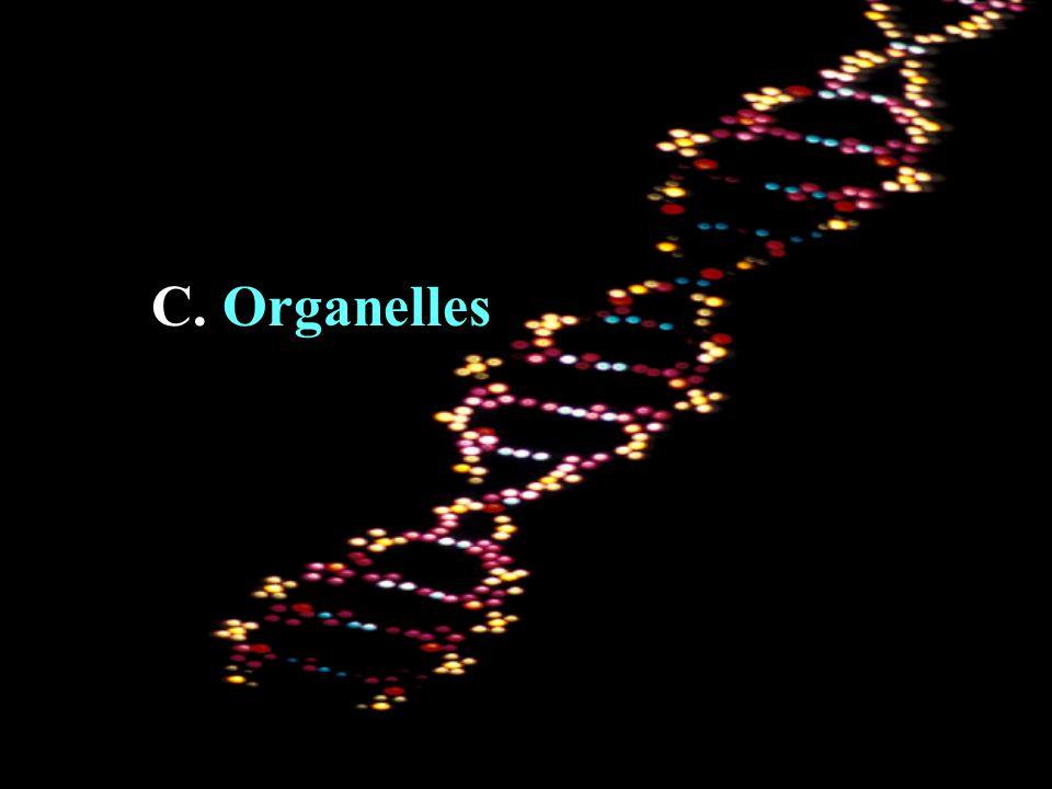 C. Organelles