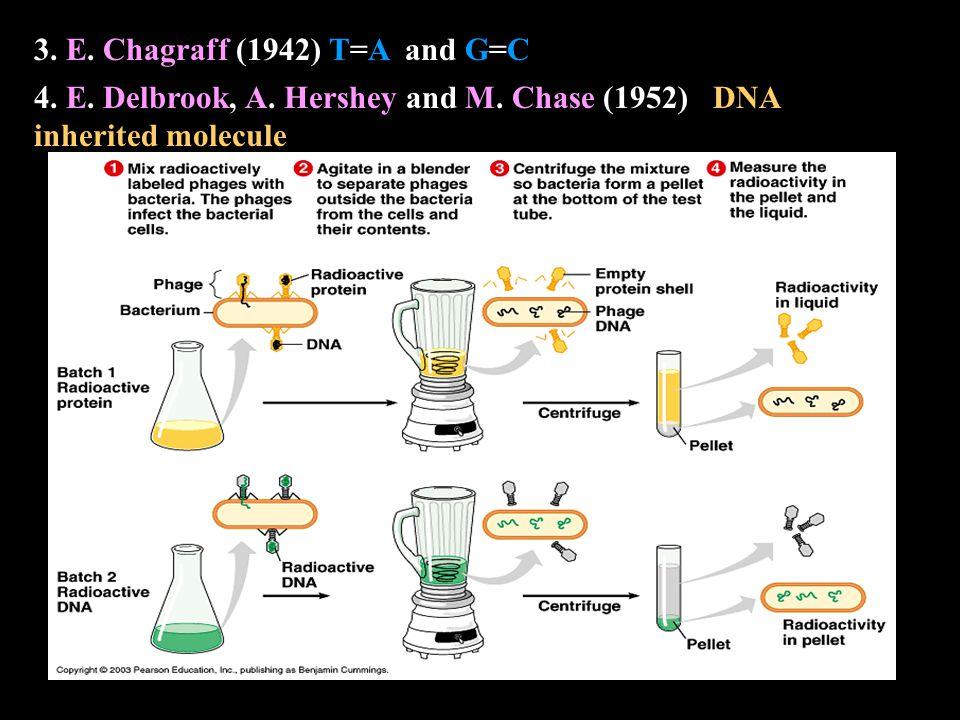 3. E. Chagraff (1942) T=A and G=CG=C 4. E. Delbrook, A.