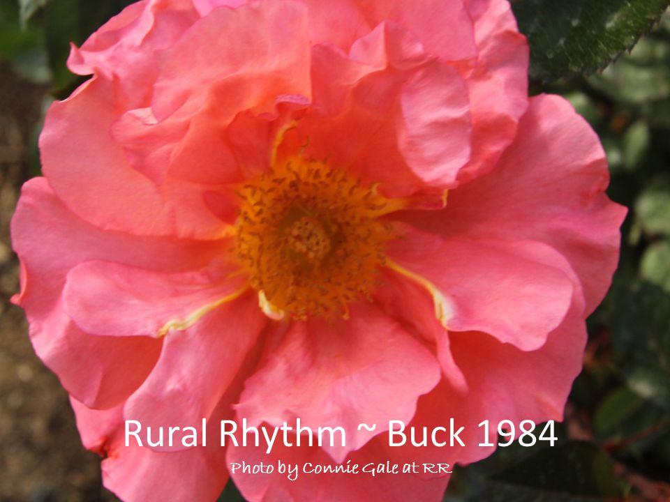 Rural Rhythm ~ Buck 1984 Photo by Connie Gale at RR