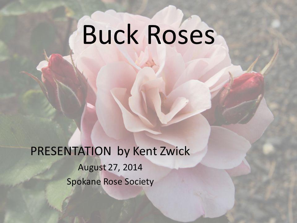 Buck Roses PRESENTATION by Kent Zwick August 27, 2014 Spokane Rose Society