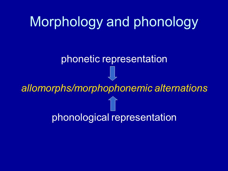 Morphology and phonology phonetic representation allomorphs/morphophonemic alternations phonological representation