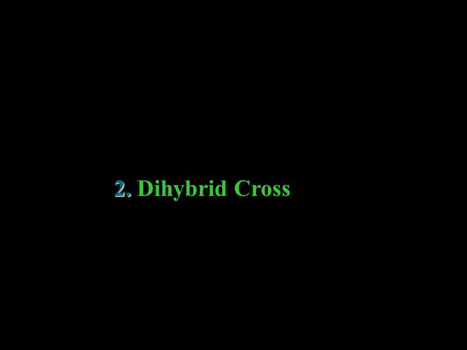 2. 2. Dihybrid Cross