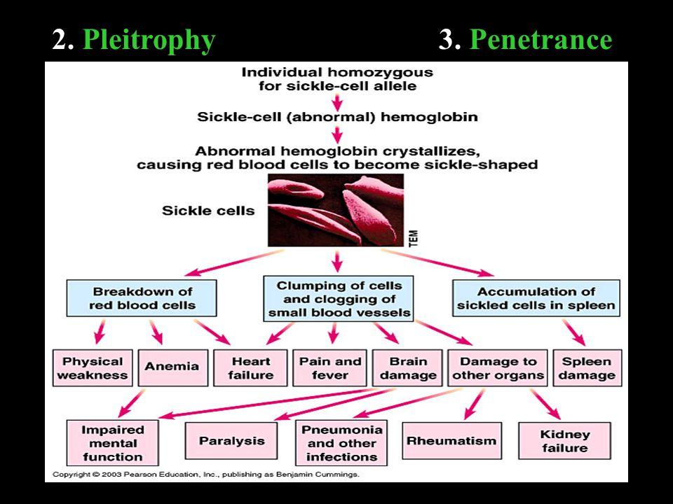 2. Pleitrophy3. Penetrance