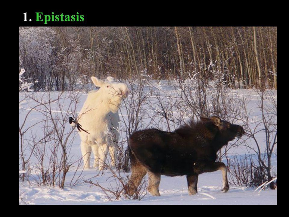 1. Epistasis