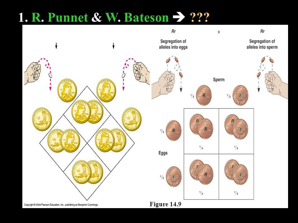 Figure 14.9 1. R. R. Punnet & W. W. Bateson 