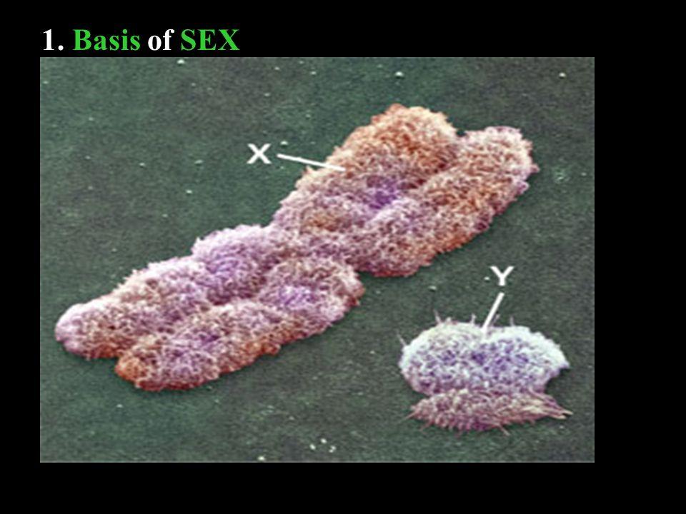 1. Basis of SEX