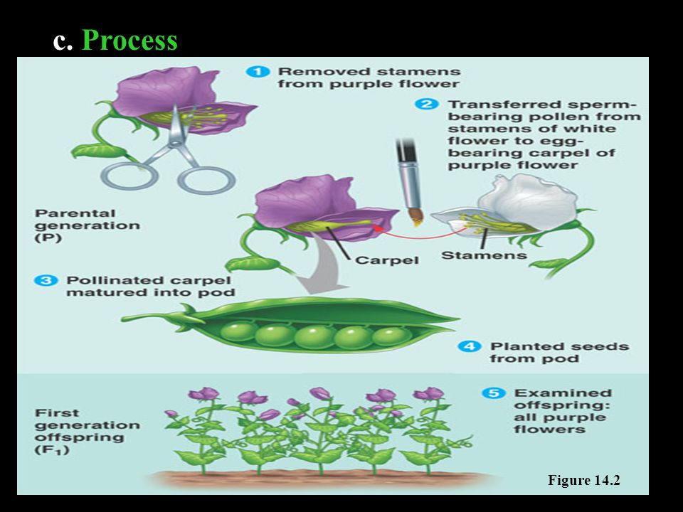 c. Process Figure 14.3