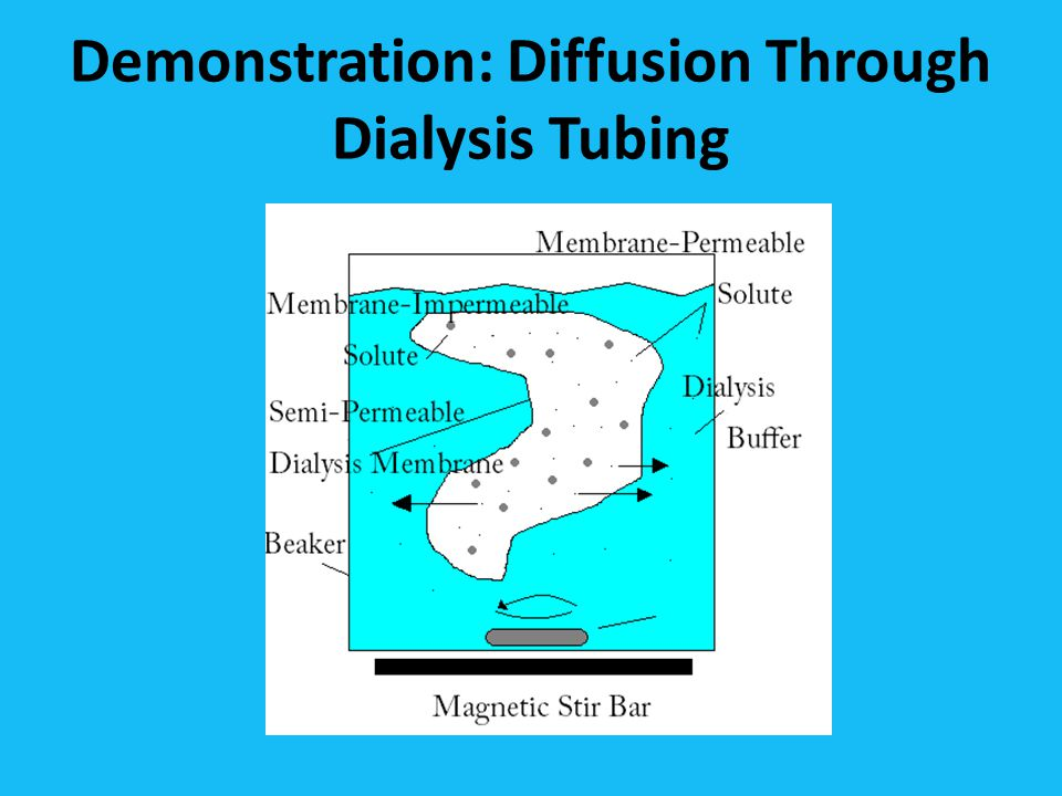 Demonstration: Diffusion Through Dialysis Tubing