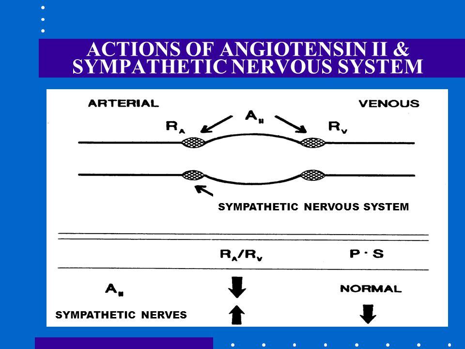 ACTIONS OF ANGIOTENSIN II & SYMPATHETIC NERVOUS SYSTEM SYMPATHETIC NERVOUS SYSTEM SYMPATHETIC NERVES