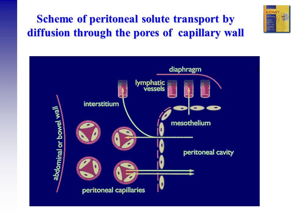 Ramesh Khanna & Karl D. Nolph Model of transport - 3 sorts of pores
