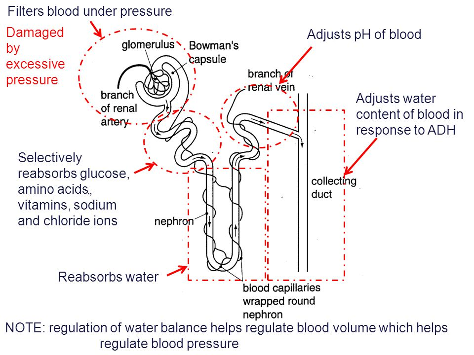 In a counter-current system, the concentration gradient is maintained along the length of the dialysis membrane 100806040 6040200 Flow Diffusion Gradient