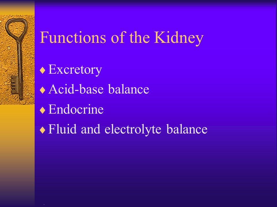 . Functions of the Kidney  Excretory  Acid-base balance  Endocrine  Fluid and electrolyte balance