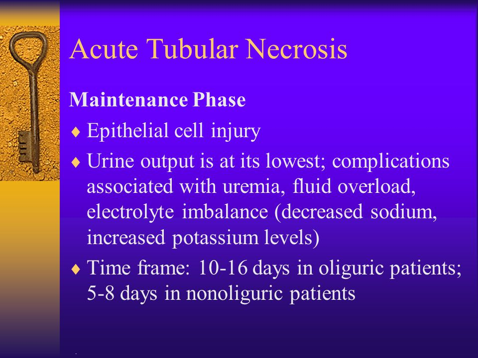 . Acute Tubular Necrosis Maintenance Phase  Epithelial cell injury  Urine output is at its lowest; complications associated with uremia, fluid overl