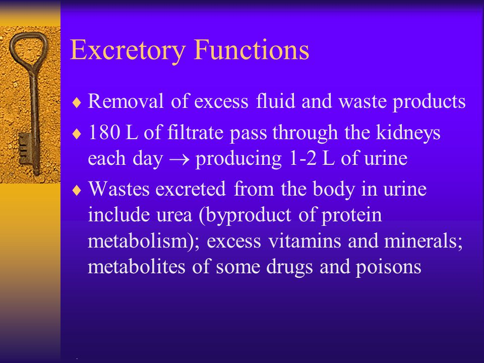 . Excretory Functions  Removal of excess fluid and waste products  180 L of filtrate pass through the kidneys each day  producing 1-2 L of urine 