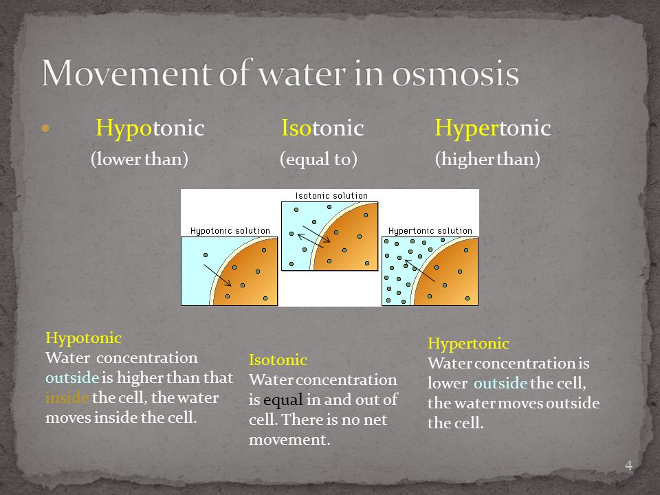 Hypotonic Isotonic Hypertonic (lower than) (equal to) (higher than) Hypotonic Water concentration outside is higher than that inside the cell, the water moves inside the cell.