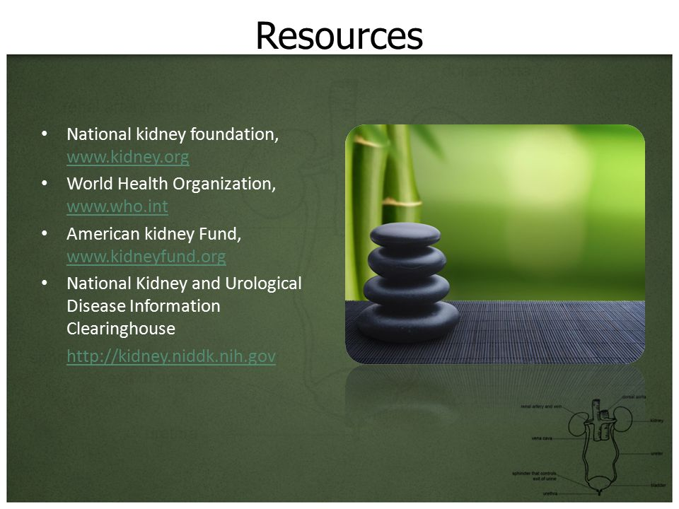 Resources National kidney foundation, www.kidney.org www.kidney.org World Health Organization, www.who.int www.who.int American kidney Fund, www.kidneyfund.org www.kidneyfund.org National Kidney and Urological Disease Information Clearinghouse http://kidney.niddk.nih.gov