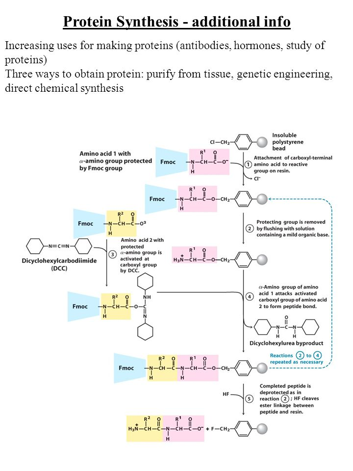 Protein Synthesis - additional info Increasing uses for making proteins (antibodies, hormones, study of proteins) Three ways to obtain protein: purify from tissue, genetic engineering, direct chemical synthesis