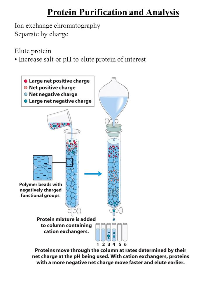 Protein Purification and Analysis Ion exchange chromatography Column- CH 2 -CH 2 -NH C2H5C2H5 C2H5C2H5 + Diethylaminoethyl (DEAE) Positively charged resin Column- CH 2 -C O O-O- Carboxymethyl (CM) Negatively charged resin