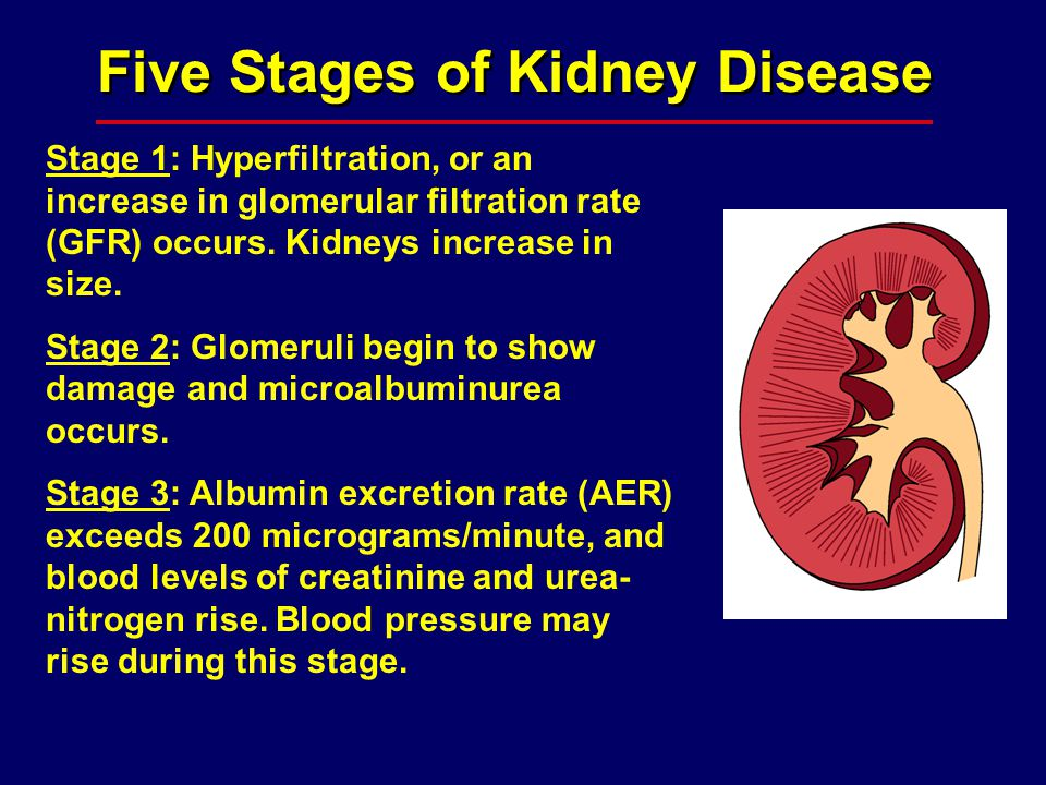 Five Stages of Kidney Disease Stage 1: Hyperfiltration, or an increase in glomerular filtration rate (GFR) occurs. Kidneys increase in size. Stage 2: