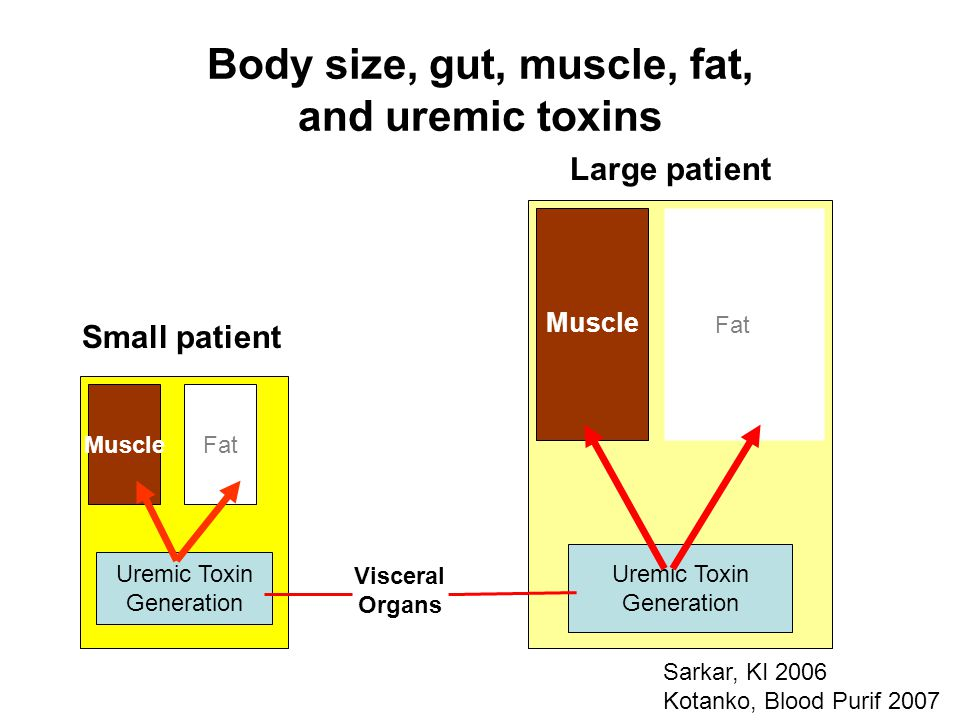 Body size, gut, muscle, fat, and uremic toxins Uremic Toxin Generation Small patient Large patient Uremic Toxin Generation MuscleFat Muscle Fat Visceral Organs Sarkar, KI 2006 Kotanko, Blood Purif 2007
