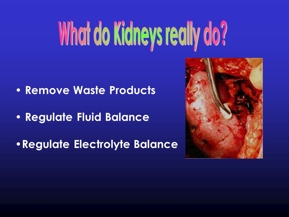 Of the water that enters the kidney, only 1% remains as urine.