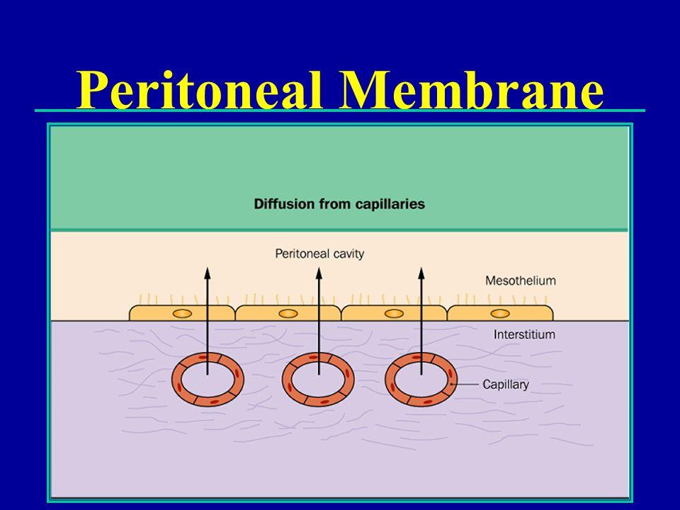Peritoneal Membrane