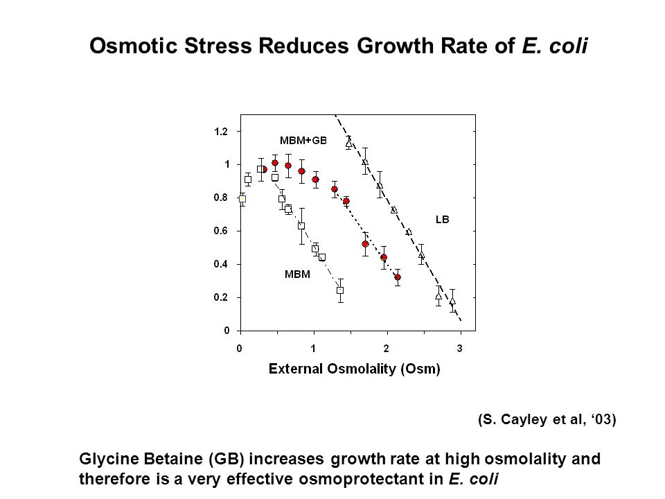 Osmotic Stress Reduces Growth Rate of E. coli (S.