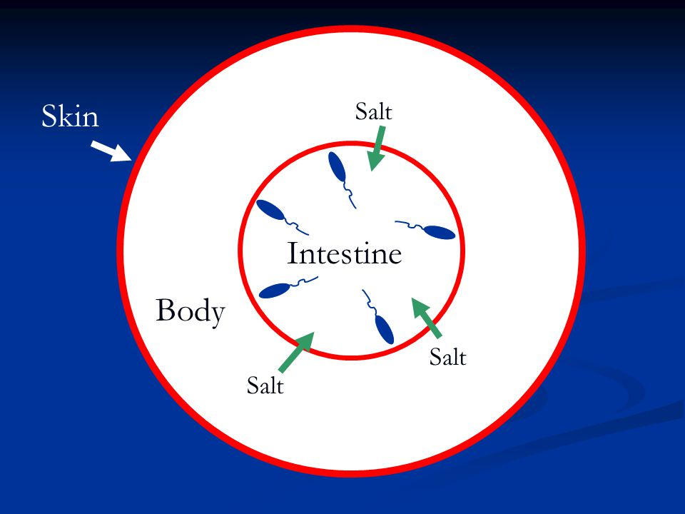 Skin Intestine Body Salt