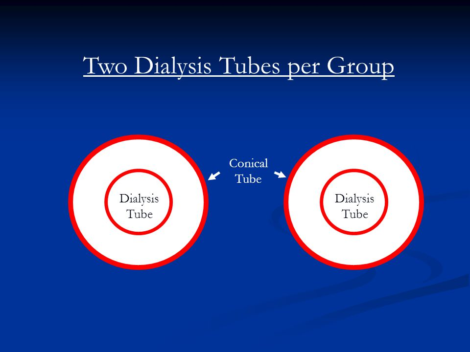Two Dialysis Tubes per Group Dialysis Tube Conical Tube Dialysis Tube