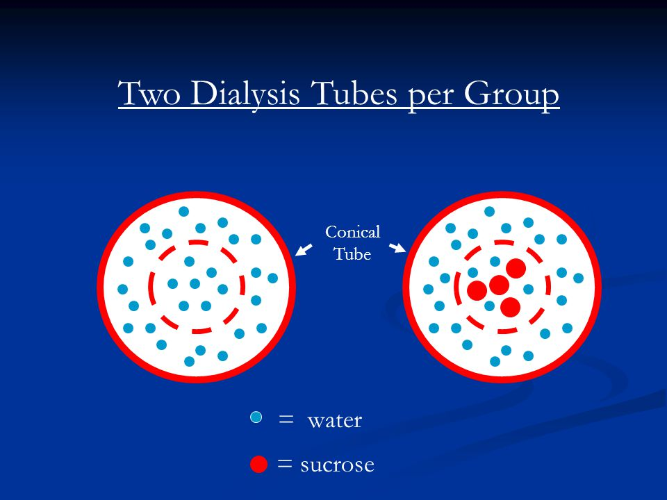 Two Dialysis Tubes per Group Conical Tube = water = sucrose