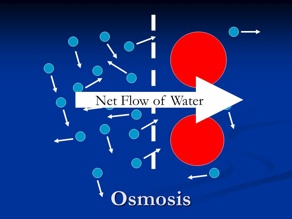 Osmosis Net Flow of Water