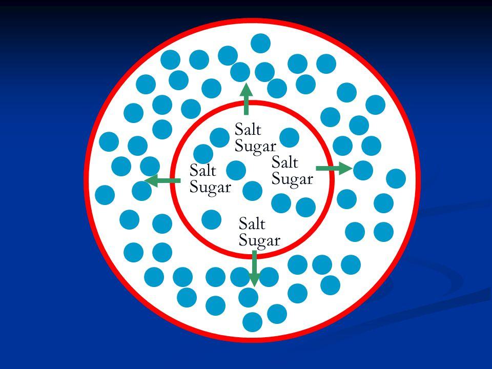 Salt Sugar Salt Sugar Salt Sugar Salt Sugar
