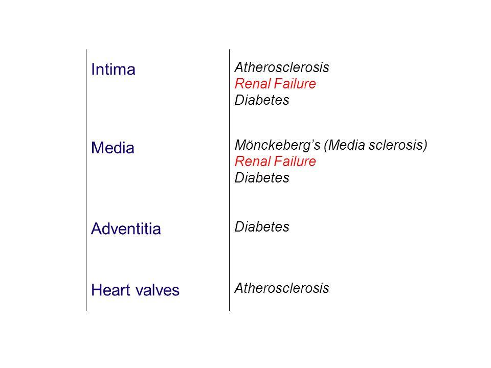 Intima Media Adventitia Heart valves Atherosclerosis Renal Failure Diabetes Mönckeberg's (Media sclerosis) Renal Failure Diabetes Atherosclerosis Diabetes