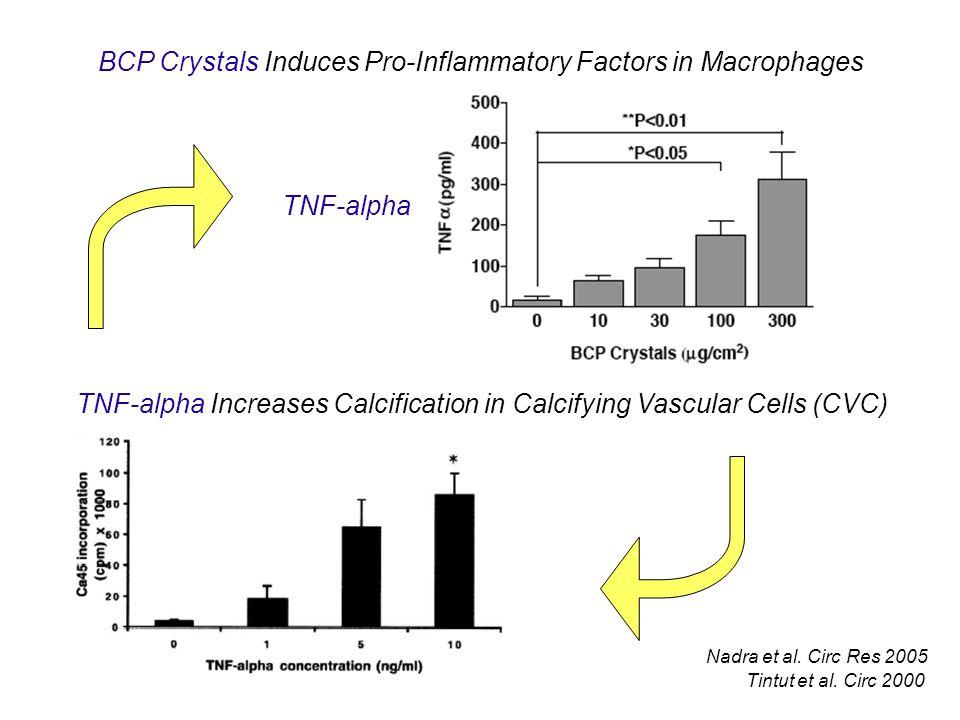BCP Crystals Induces Pro-Inflammatory Factors in Macrophages TNF-alpha Nadra et al.