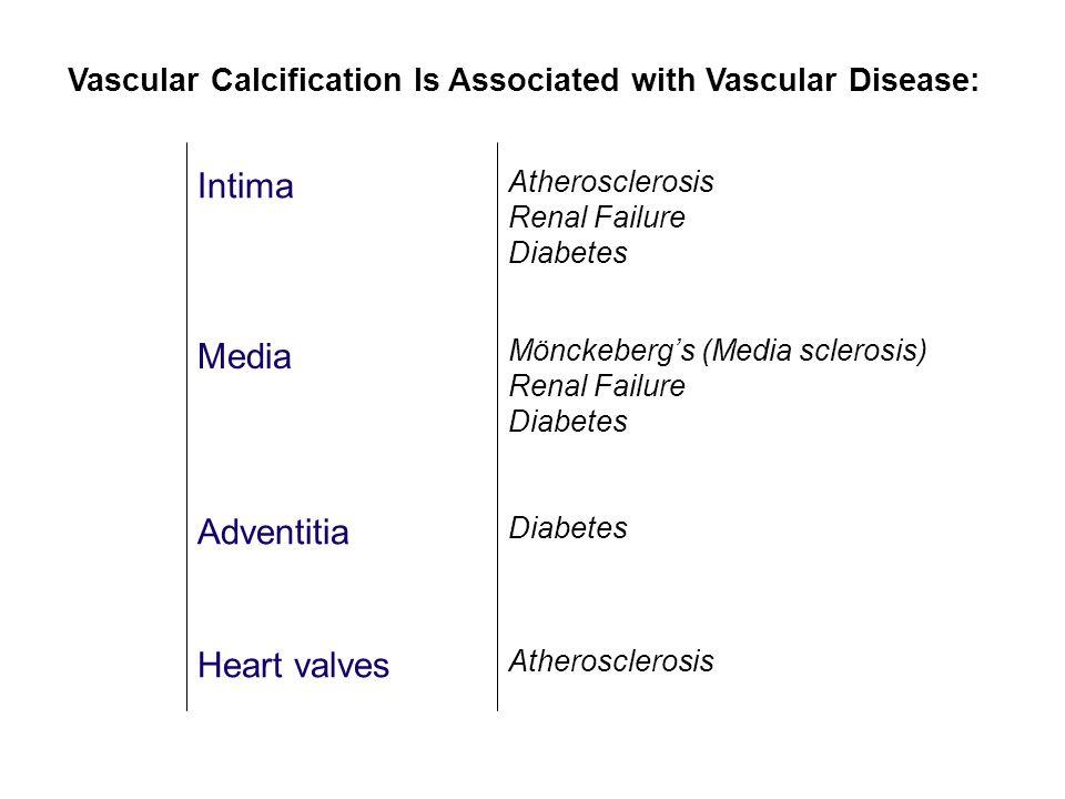 Intima Media Adventitia Heart valves Atherosclerosis Renal Failure Diabetes Mönckeberg's (Media sclerosis) Renal Failure Diabetes Atherosclerosis Diabetes Vascular Calcification Is Associated with Vascular Disease: